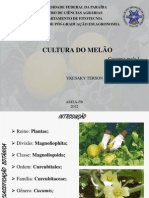 Cultivo do Melão - Ykesaky Terson
