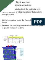 clasificacion de uniones celulares