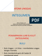 ANATOMI UNGGAS 01 - integumen