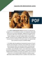 Preguntas y respuestas del adiestramiento canino