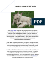 El comportamiento natural del Bull Terrier