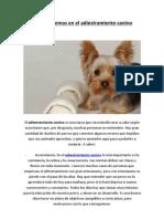 Tres problemas en el adiestramiento canino