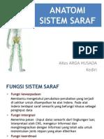 Anatomi Sistem Saraf-dr Arifin Arga Hus