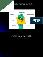 Cranial Nerves1