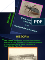 Rhodnius ecuadoriensis