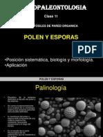 Micro Clase 11 Polen Esporas