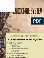 Endocrine System Ss