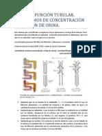 Tema 15. Función tubular. Mecanismos de concentración y dilución de orina.