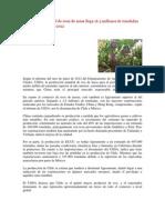 - Producción mundial de uvas de mesa llega 16.5 MILLONES DE TM