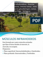 MUSCULOS INFRAHIOIDEOS