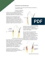 Informacion de La Enfermedad Periodontal (1)