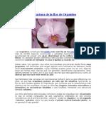 Estructura de La Flor de Orquídea