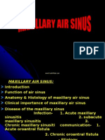Maxillary Air Sinus Oral