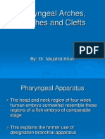 pharyngeal arches and pouches