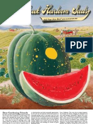 Amaranth Merkado organic seeds Ukraine D Garden idea