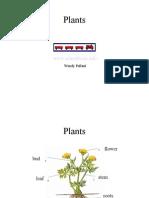 Plants 2