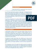carcinoma_basocelular.pdf