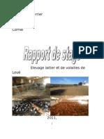 Rapport de Stage Mihaescu Cornel (IL3) Variant Finit
