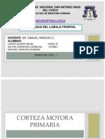 FISIOLOGÍA DEL LOBULO FRONTAL