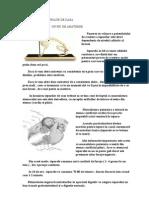 7. ALIMENTATIA IEPURILOR DE CASA.doc
