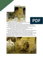 3. CRESTEREA IEPURILOR DE CASA.doc