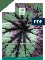 Begonia Rex 06 Hi