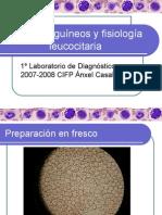 Frotis sanguíneos y fisiología leucocitaria