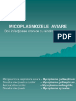 Micoplasmozele aviare