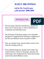Histology drawings.pdf