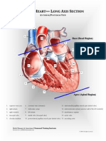 Adult Heart- Long Axis Section.pdf