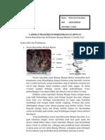 3.Sistem Reproduksi Dan Sel Kelamin Merpati