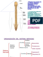 sistema endocrino 2