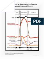 cardiac anatomy charts to help students understand the basic anatomy