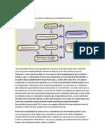Fisiología Endocrina- GH