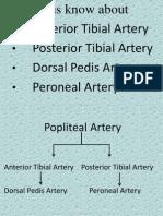 Anterior Tibial Artery, Posterior Tibial Artery, Dorsal Pedis Artery, Peroneal Artery