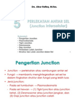 Biokedokteran Junction sel