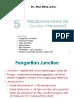 Biokedokteran Junction sel