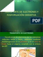 2. Cadena Transportadora de Electrones 2012