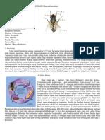 Gambar Morfologi Lalat Rumah
