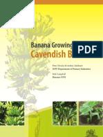 Banana Growing Guide Cavendish Bananas