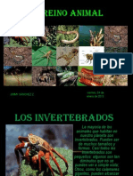 Los Invertebrados Jim PRESENTACION