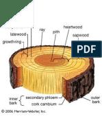 Resíduos de toras de madeira