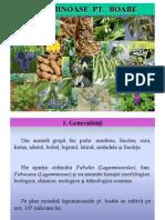 plante leguminoase