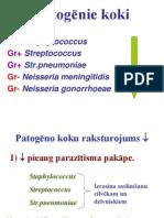 8 SVF Koki Corynebact Mycobact