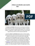 Consejos para Educar a un Labrador y que se porte bien