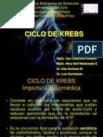Clase Ciclo de Krebs