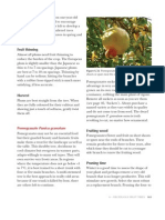 Pruning Pomegranates
