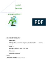 PROIECT TEMATIC