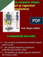 Filehost_Planuri Si Raporturi Anatomice(Prezentare Catalin)
