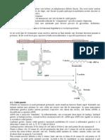 sinteza de proteine